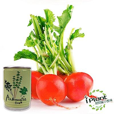 【 iPlant 】易開罐頭小農場-櫻桃蘿蔔