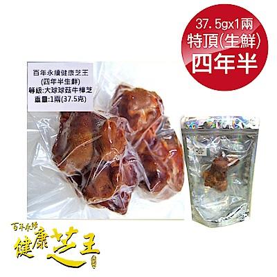 百年永續健康芝王 (四年半) 特頂大球菇牛樟芝/菇 生鮮品 37.5g/1兩