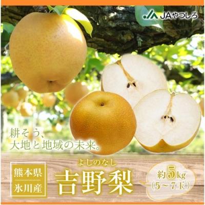 【天天果園】日本原裝熊本縣吉野梨5kg(約5-7顆)