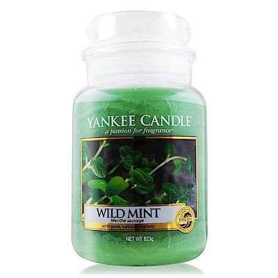 YANKEE CANDLE 香氛蠟燭-野生薄荷 Wild Mint 623g