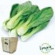 iPlant積木農場-小白菜 product thumbnail 2