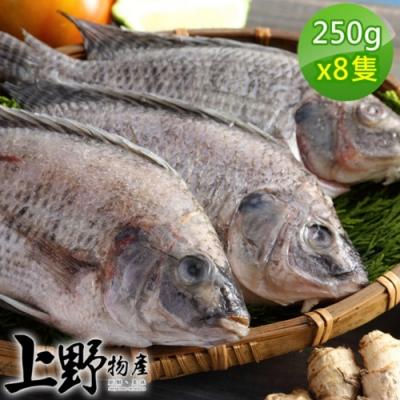 【上野物產】嚴選台灣鯛魚 (250g土10%/隻) x8隻
