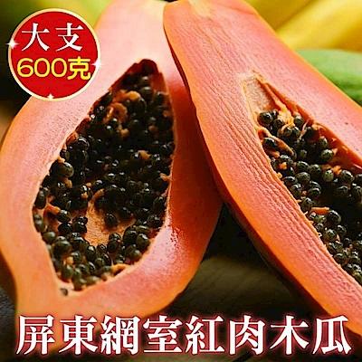 【天天果園】屏東網室紅肉木瓜(每顆約600g) x4顆