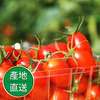 【果物配】溫室特優玉女小番茄《皮薄肉嫩真玉女/2.4公斤》