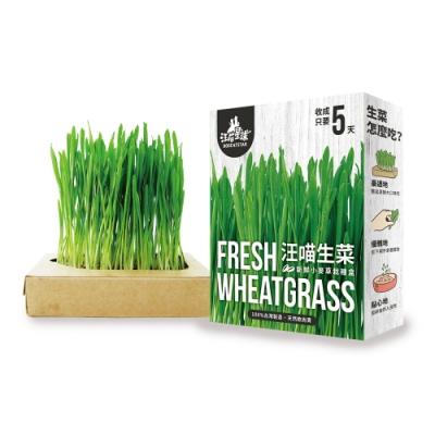 (三盒組)汪喵星球 汪喵生菜-新鮮小麥草栽種盒 65g