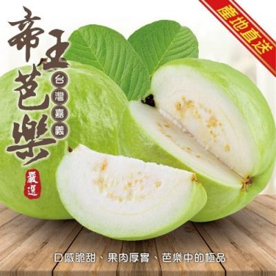 顧三頓-台灣頂級帝王芭樂x1箱(1箱/每箱10斤±10%)