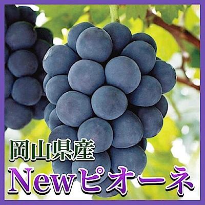 【天天果園】日本岡山貓眼葡萄原裝 x700g/串
