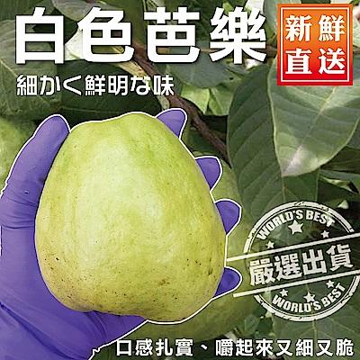 【天天果園】頂級套網燕巢牛奶珍珠芭樂 x3斤