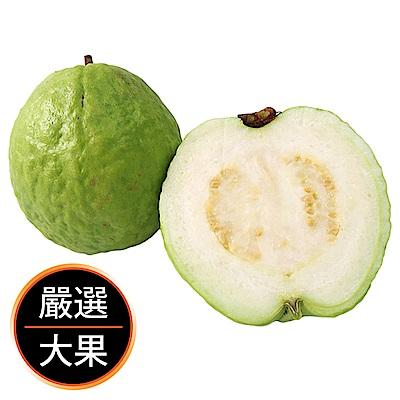 【果物配】帝王芭樂.產銷履歷(3kg/8-12顆入)