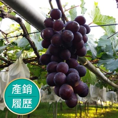 【果物配】產銷履歷巨峰葡萄《渾圓飽滿/2.5kg》