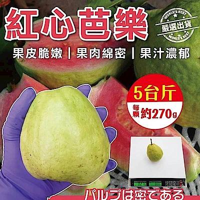 【天天果園】彰化溪洲草生栽培 紅心芭樂(5斤/箱)