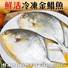 (滿699免運)【海陸管家】大尾野生黃金鯧1尾(每尾約650g)