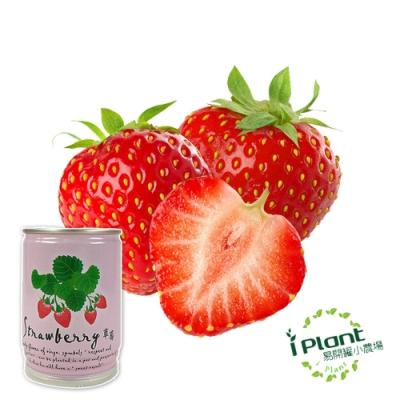 【 iPlant 】易開罐頭小農場-草莓