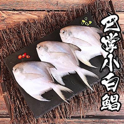 【海鮮王】巴掌小白鯧x8隻組(150g±10%/隻) (無去腮去肚)