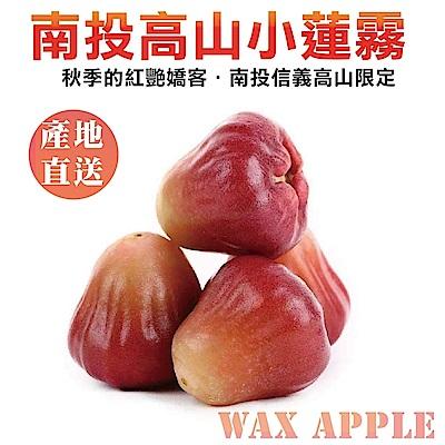 【天天果園】南投信義高山小蓮霧 x3台斤
