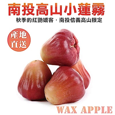 【天天果園】南投信義高山小蓮霧 x10台斤