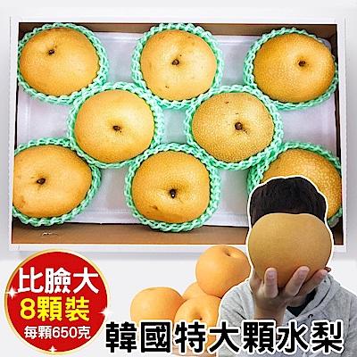 【天天果園】韓國超大顆水梨(每顆約650g) x8顆
