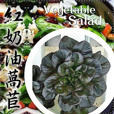 (任選12朵)【天天果園】台灣小農溫室萵苣-紅奶油萵苣(約100g)