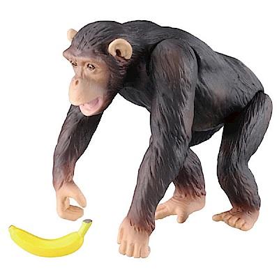 任選TOMICA多美動物園 AS-14 黑猩猩_AN98149 TAKARA TOMY