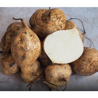 鮮採家 屏東清甜爽脆豆仔薯3台斤1箱