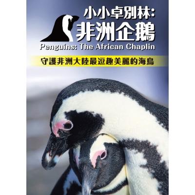小小卓別林:非洲企鵝 DVD