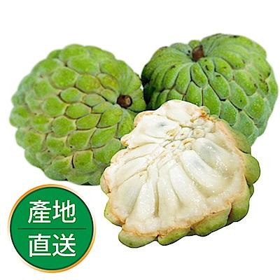 【果物配-任選699免運】大目釋迦.有機(500g /A級果1顆)