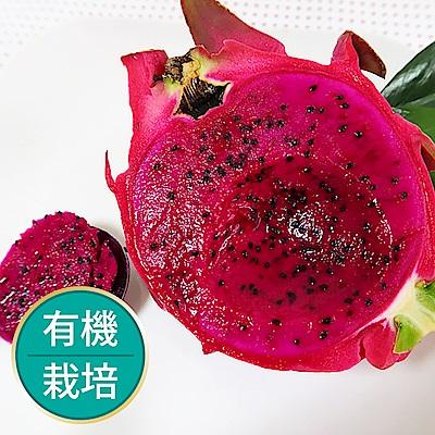 【果物配】紅肉火龍果.有機栽培(3kg)