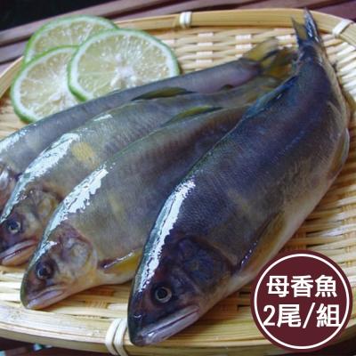 新鮮市集 隻隻抱卵母香魚組(2尾/組)