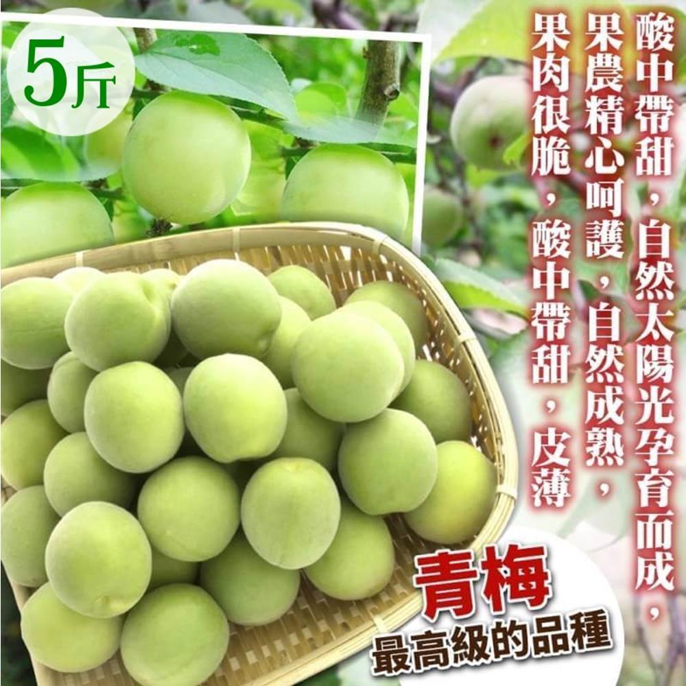 天天果園*台灣嚴選青梅 x5台斤±10%