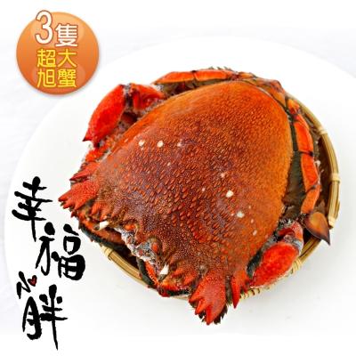 幸福小胖  超大旭蟹 3隻