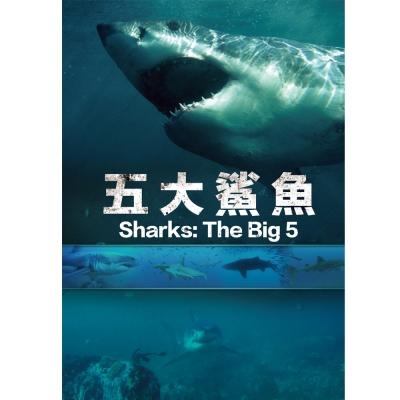 五大鯊魚 DVD