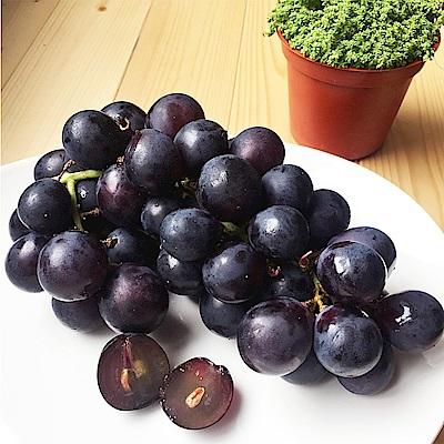 【愛上水果】台灣溫室巨峰葡萄2公斤(約4串/箱)