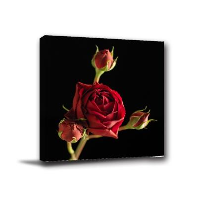 24mama掛畫-單聯方形花卉餐廳花店主題民宿飯店掛飾無框畫掛畫-玫瑰-50x50cm