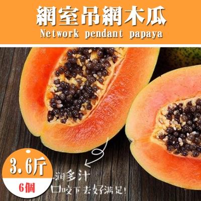 果之蔬 網室吊網木瓜 6個/約3.6斤/箱±10%
