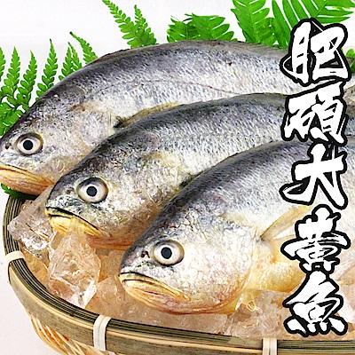 【海鮮王】當季肥碩大黃魚 *3件組(400g±10%/尾)