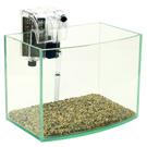 《清新風格》6吋海灣型玻璃水族箱套缸+專用過濾器(台灣缸)