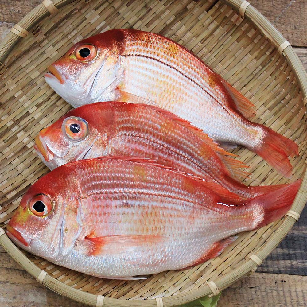 魚博士-魚霸 野生現撈赤宗6尾組(120g~150g /尾)