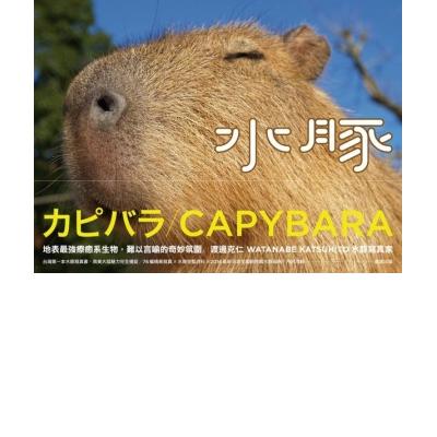 水豚(附精美海報)