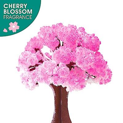 賽先生科學 魔法櫻花(小/10cm)-獨家櫻花香