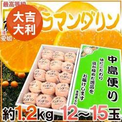 日本頂級中島便溫室蜜柑