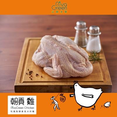 【山林水草】朝貢雞 全雞 2隻(2kg+/隻) 含運