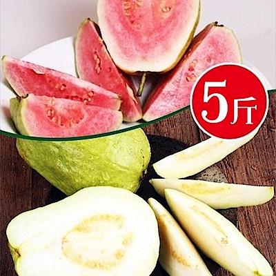 【天天果園】頂級套網燕巢牛奶珍珠芭樂&紅心芭樂雙拼 x5斤