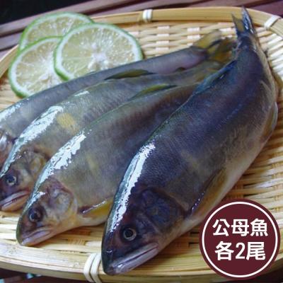 新鮮市集 鮮美公母香魚綜合組(各2尾)