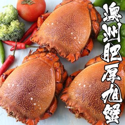 海鮮王 澳洲肥厚旭蟹*2隻組( 450g±10%/隻?)