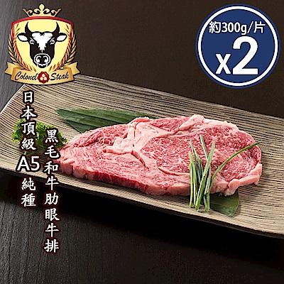 (上校食品)日本頂級A5純種黑毛和牛肋眼牛排2片組(共2片-約300g/片)