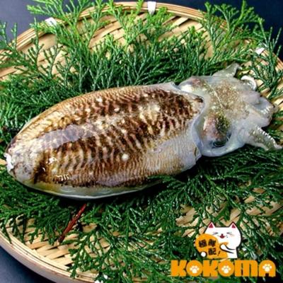 極鮮配 鮮凍野生大軟絲 (200g~300g/隻)-5隻