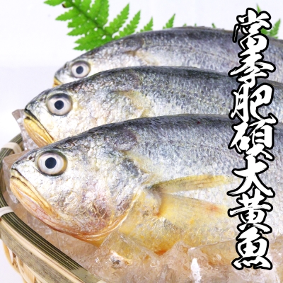 海鮮王 當季肥碩大黃魚 *1隻組400g±10%/隻(任選)