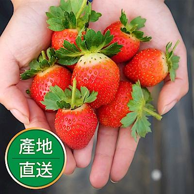 【果物配】特級草莓禮盒.有機栽種(多顆最划算/每箱40入)