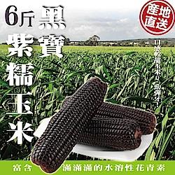 【天天果園】黑寶紫糯米玉米(6斤/箱)