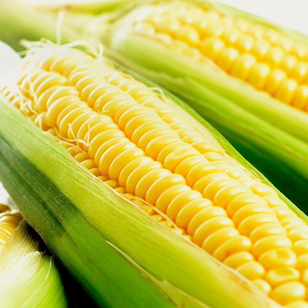 鮮採家 超甜黃玉米6台斤1箱(約12-18支)